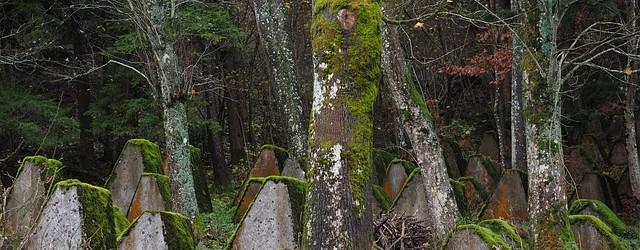 groblje-suma-zasoljeno